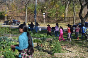 Students in Justin's class have been studying urban agriculture.