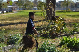 A student carries a spent sunflower to a compost pile.