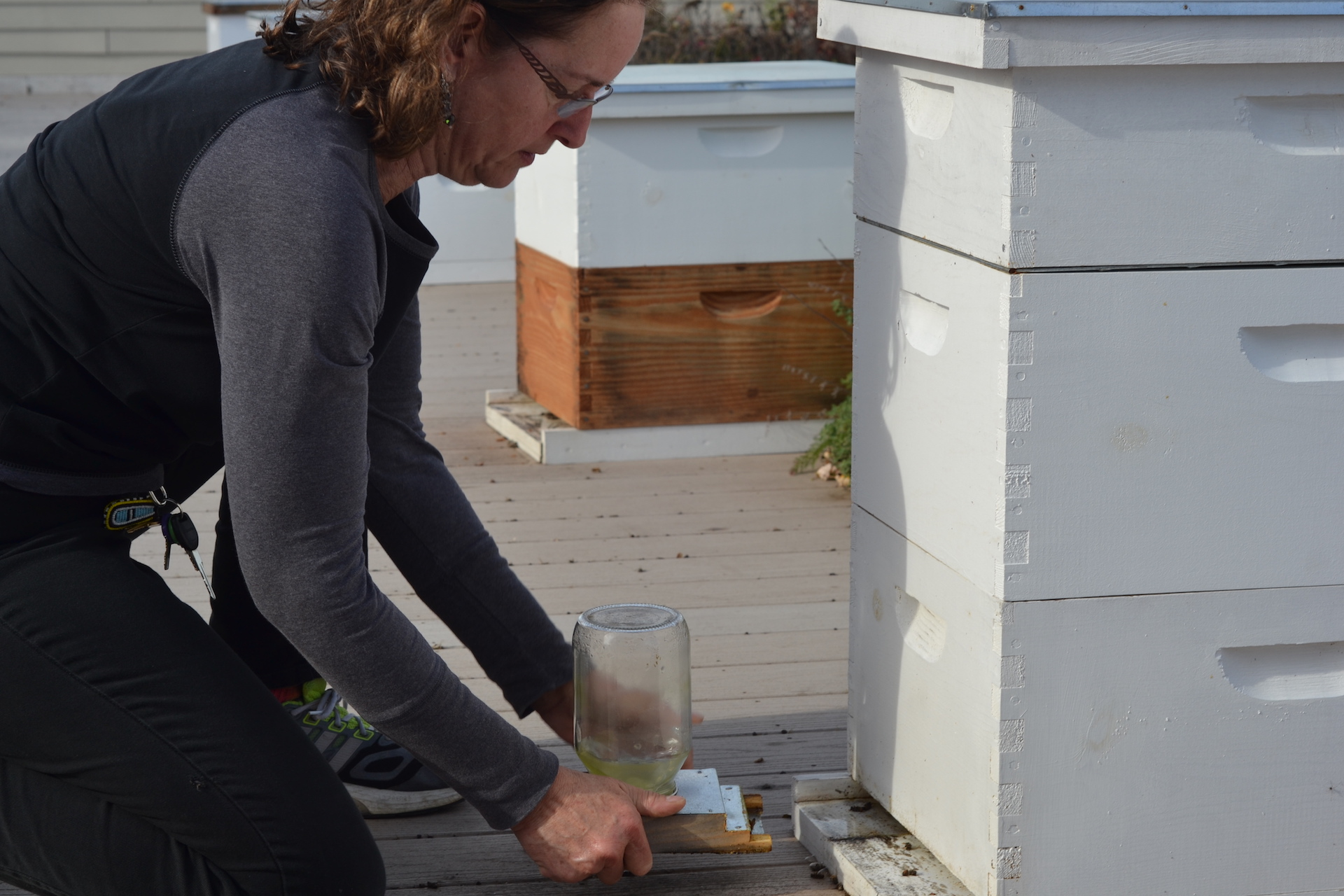 Farm Manager, Carolyn Mello, checks a bee hive's water supply.